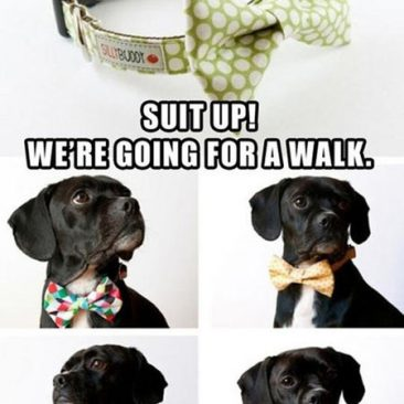 Suit Up! We're Going For A Walk.